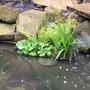 New marginal plants!!