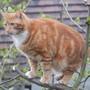 Mr Sandy Cat