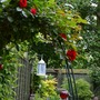 Back garden