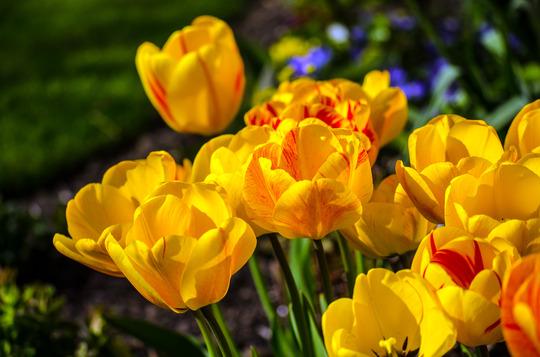 April colour 3