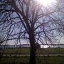 Bosham_meadow