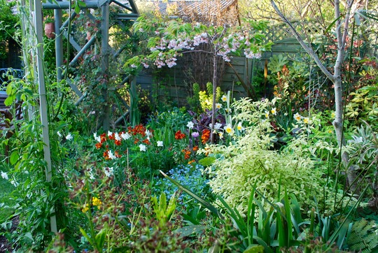 Middle border.......Planted up with wallflowers,until the perennials take over.
