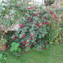 Garden Spring 2014 008