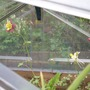 Aqui_seedlings_cold_frame