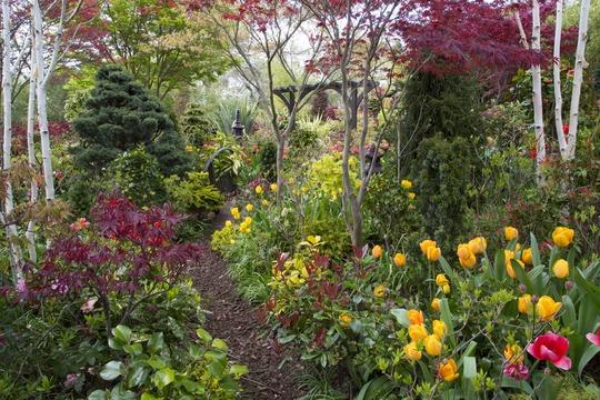 Tulips in the lower garden