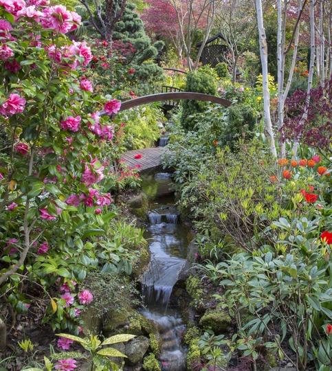 End of stream in woodland garden