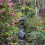 End of stream in woodland garden