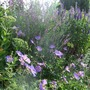 Purple_and_blue_in_the_top_border