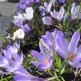 May_flowers_008