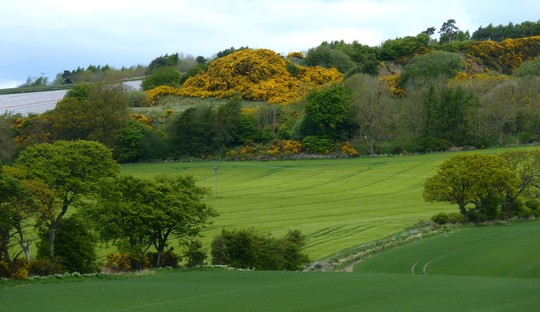 Beautiful view behind my house with Gorse (Using Zoom)