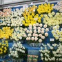 Narcissus  at Chelsea 2015 (Narcissus)
