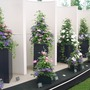 More Clematis  at Chelsea 2015 (Clematis)