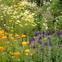 Mid summer perennials at their best