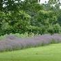 Summer_garden_2008_finn_and_popps_114