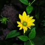 Close up yellow flower