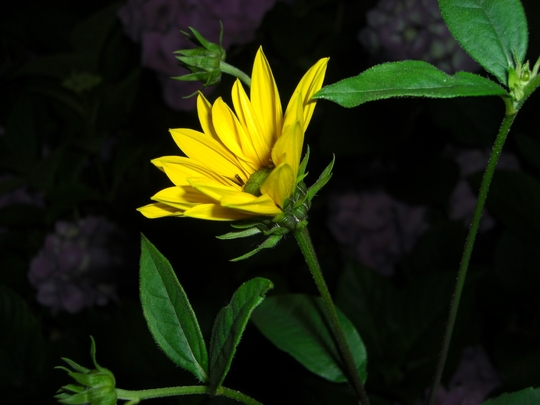 Close up flower 2