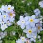 Garden_june_12_034