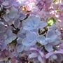 Garden_june_12_024