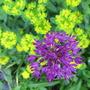 Garden_june_12_032
