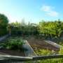 Fruit garden progressed