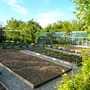Fruit garden...again