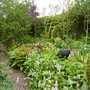 Bog garden (Persicaria bistorta (Bistort))