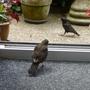 Guard bird!