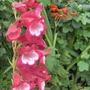New_garden_004
