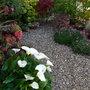 Arum Lillies (Zantedeschia aethiopica)