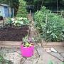 allotment start