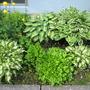 June_garden_002