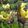 June_garden_018