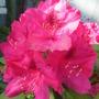 June_garden_012