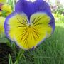 June_garden_015
