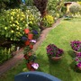 One side of my garden