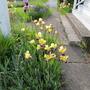 June_garden_060