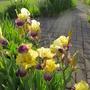 June_garden_058