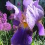 June_garden_045