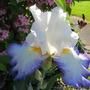 June_garden_033