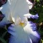 June_garden_028