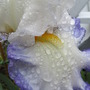 June_garden_014