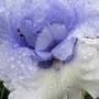 June_garden_008