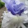 June_garden_013