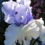 June_garden_032
