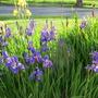 June_garden_062