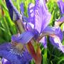 June_garden_067