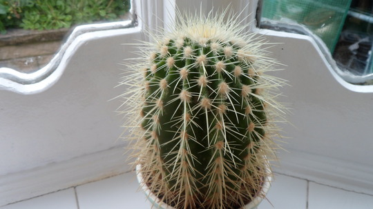 Cactus [No Name] For Hywell