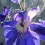 July_18_garden_2015_003