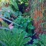 My garden pic2