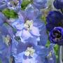July_21_2015_garden_006